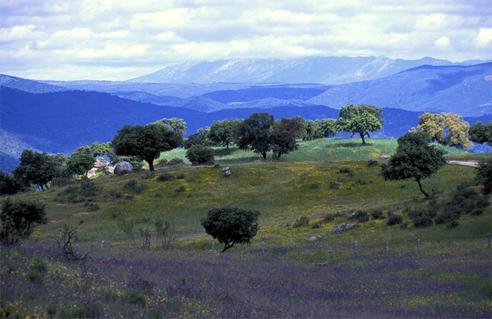 La Dehesilla